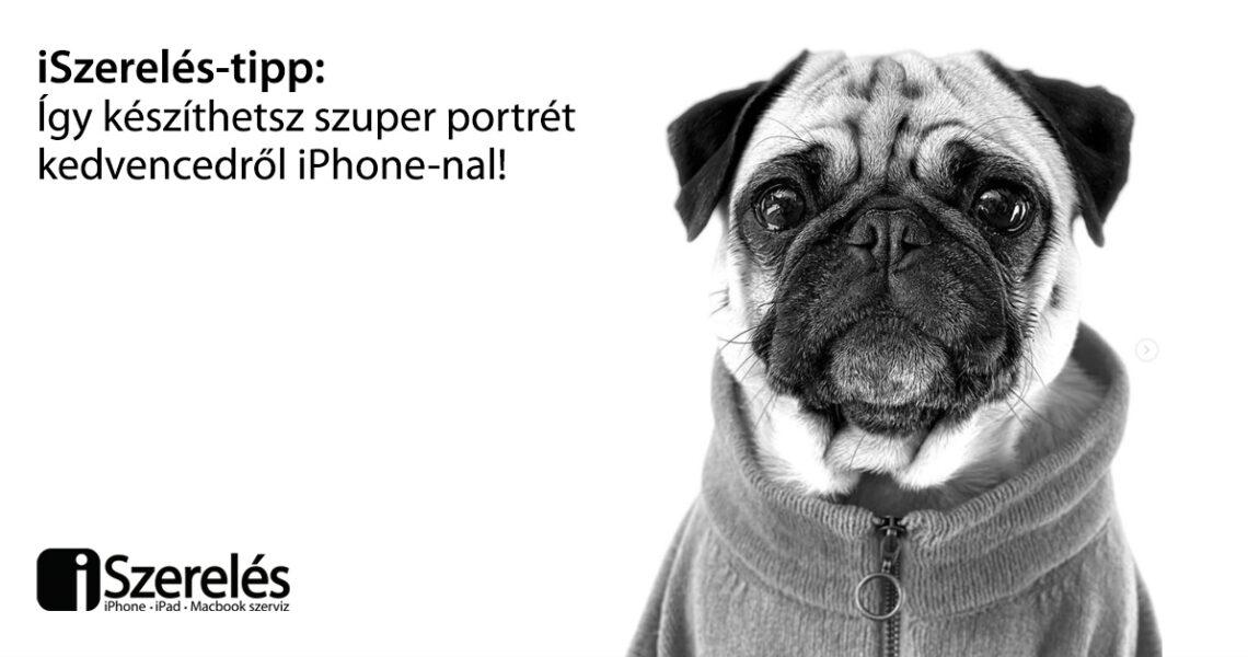 fotózz portrét kedvencedről iPhone-nal
